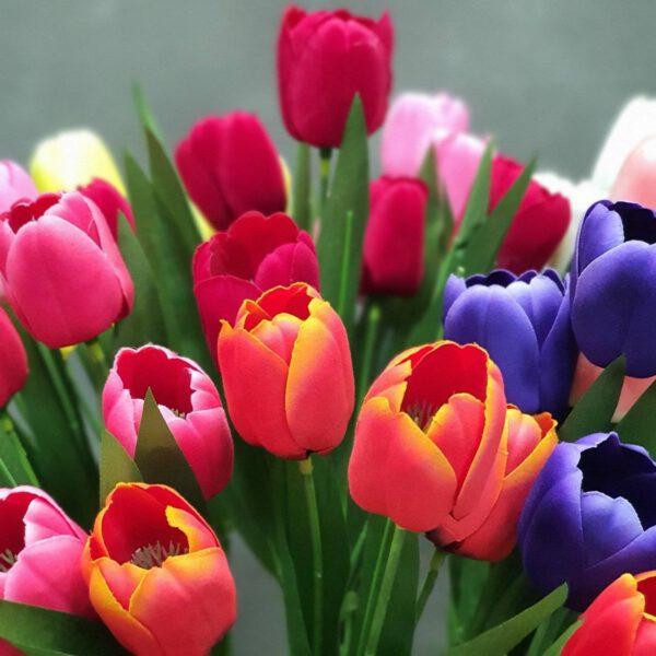 ทิวลิป-ดอกขิง