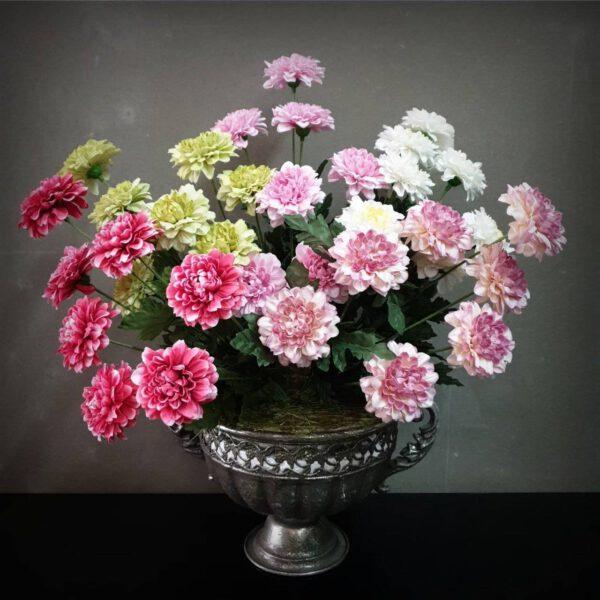 ดอกมัม-บานชื่น-เดซี่